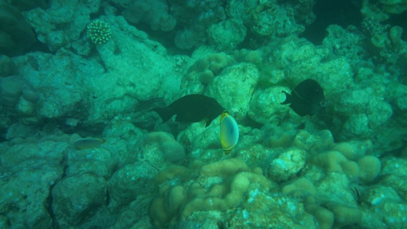 Surin Island 11